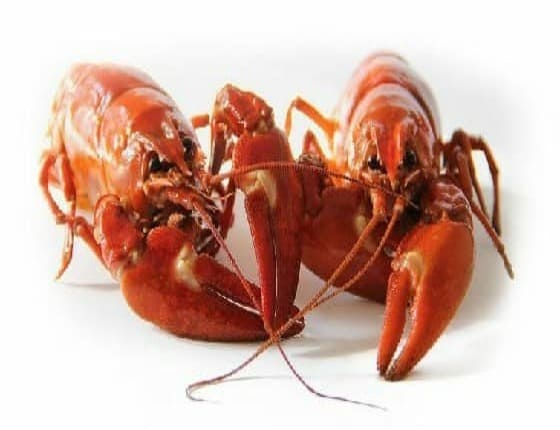 Can Dogs Eat Lobster? Is Lobster Bad For Dogs?