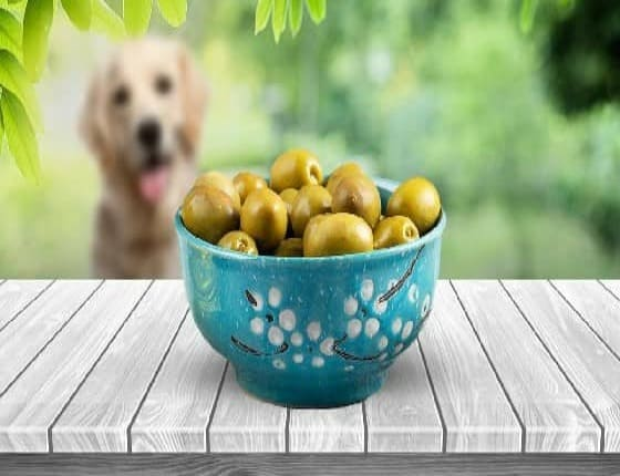 Can Dogs Eat Olives? Are Olives Good For Dogs?
