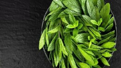 Can Dogs Eat Peppermint? Is Peppermint Safe For Dogs?