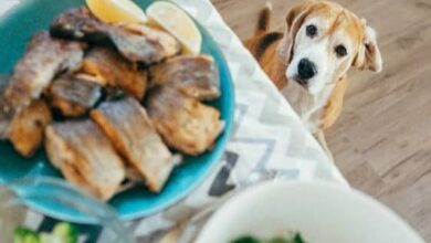 Can Dogs Eat Scallops? Are Scallops Bad For Dogs?